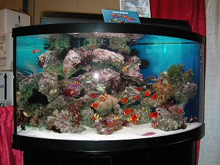 This 92 Gallon Corner Tank Setup Was Won By Larry Burt Of The Marine Aquarium Society Michigan